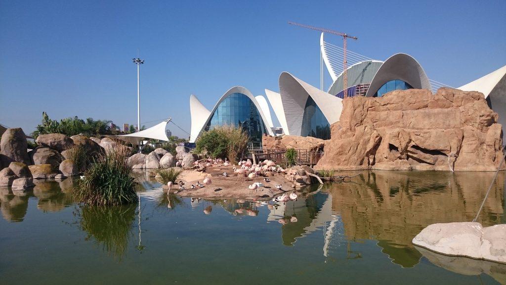 Oceanografic aquarium Valencia